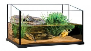 Как_выбрать_аквариум_для_красноухой_черепахи